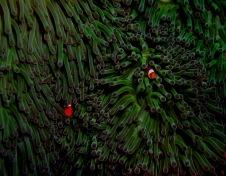 janice-nigro-anemone-and-fish.jpg
