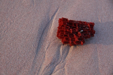 red coral that makes Pink Beach