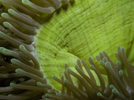 anemone abstract