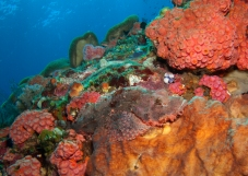 scorpionfish and his backyard