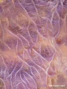 sponge all natural colors! well with the strobe