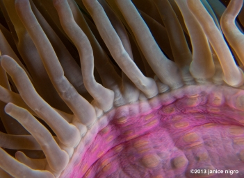 underside of an anemone-colors are saturated but real!