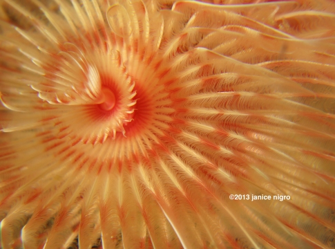 tube worm copy