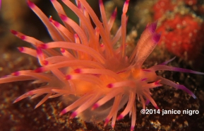 bright nudibranch copyright