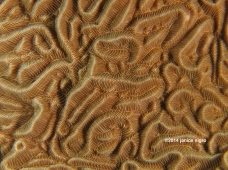 coral abstract 6705 copyright