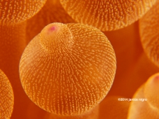 3867 adjusted orange anemone bubble copyright