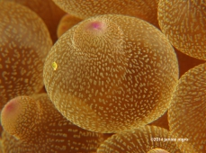 bubble anemone abstract G 3865 copyright