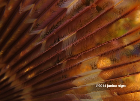 feather worm 7966 copyright