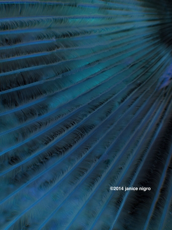 feather worm 8372 copyright