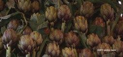 artichokes IMG_0239 copyright