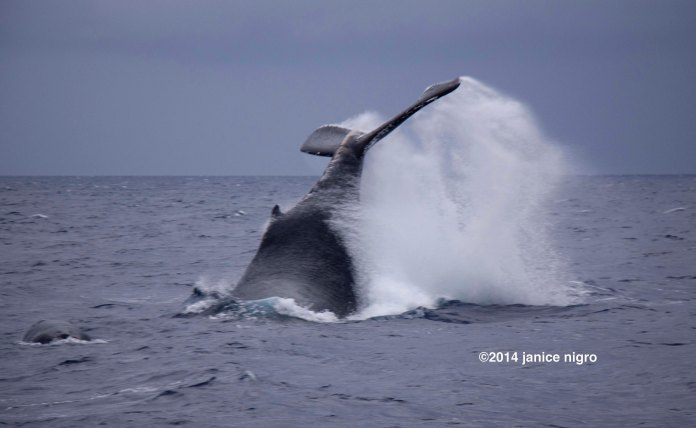 whale tale 1007 copyright