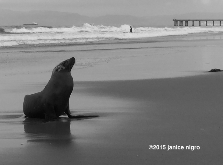 seal BW 1114 copyright