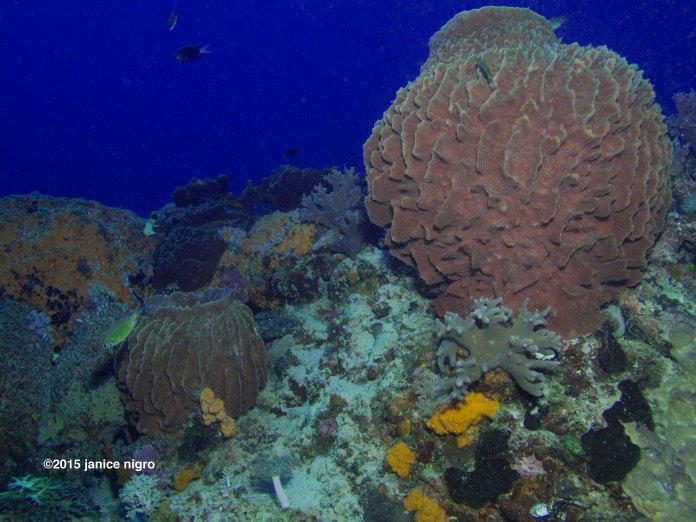 reef scene 6821 adjusted