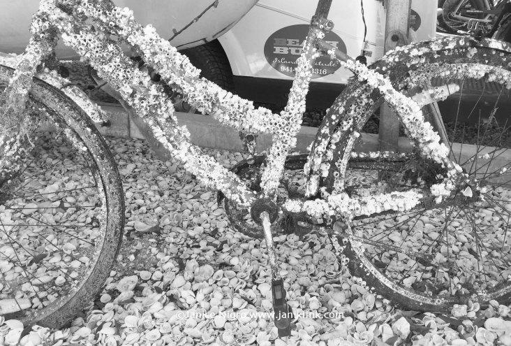 bike 6117 copyright 2