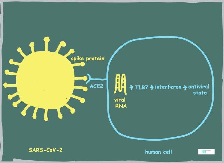 COVID genetics cartoon low resolution copy